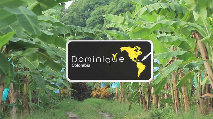 Dominique Bananas